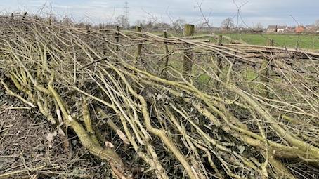 A laid hedge