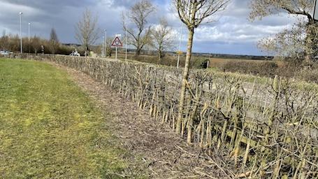 Flailed hedge