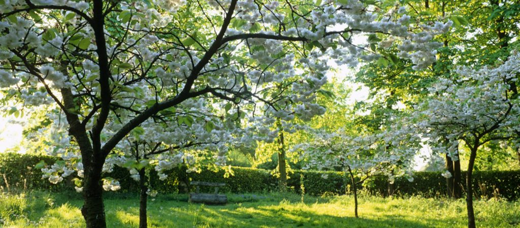 Trees in bloom at Whipsnade Tree Cathedral, Bedfordshire. National Trust